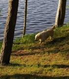 Norvegijoje sugriežtinti gyvūnų gerovės reikalavimai
