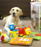 Krauname bagažą užsiėmimui su šunimis