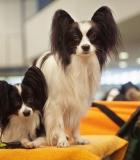 Ką reikia žinoti apie šunų ženklinimą?