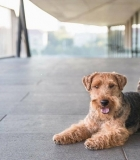 Vilniečiams – atnaujintos gyvūnų laikymo taisyklės
