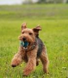 Žaidimai su kamuoliuku