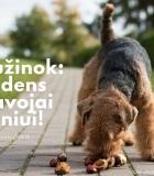 Kaštonai, gilės, kaulavaisiai – ar tai kelia pavojų šuns sveikatai?