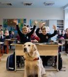 """""""Kitokios pamokos"""" su šunimis"""