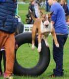 Užsiėmimai su šunimis vasarą: ką būtina žinoti?