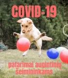 Ar šunims kelia pavojų COVID-19 virusas?