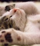 Gyvūnų gerove galime ir turime rūpintis visi