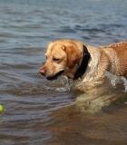 Vandens malonumai: kaip augintinį išmokyti plaukti?