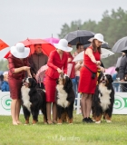Kokie konkursai vyksta tarptautinėse šunų parodose Lietuvoje?
