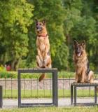 Lietuvoje tarp augintinių populiariausi šunys