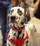 Šunų draudimas tampa vis populiaresnis