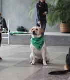 Universitete šėlo šunys