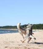 S.Ročka: nenormalu, jeigu šunys pjaunasi