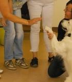 Kaniterapijos kursų lankytojai vedė užsiėmimus