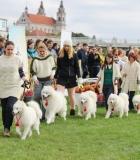 Gyvūnų globos diena paminėta prie Baltojo tilto