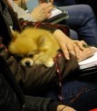 Šunų veisėjai dalyvavo paskaitoje apie genetiką