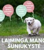 Ar šuniuko laimė – žaislų kiekyje?