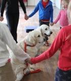 Šunys nuspėjo vaikų jausmus ir skaitė mintis