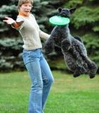 Laisvalaikis su šunimi: lėkščiasvydis